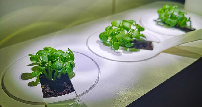 Smart Garden Grow