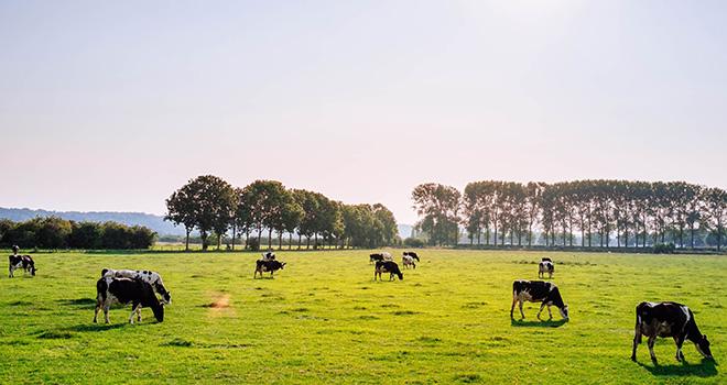 Dieta Carnivora Agricultura ©Leon Ephraim