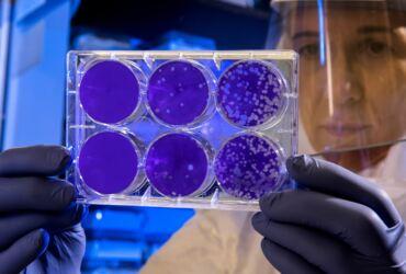Coronavirus Pandemia ©CDC