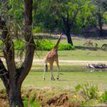 Animal em Casa ©Badoca Park